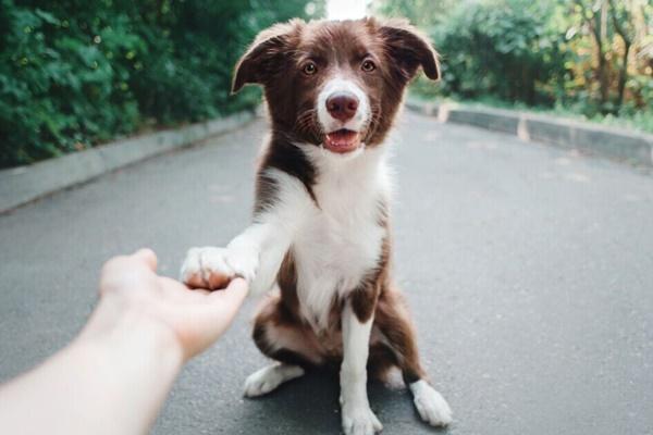 cane che dà la zampa al suo padrone
