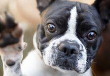 cane che porge la zampina