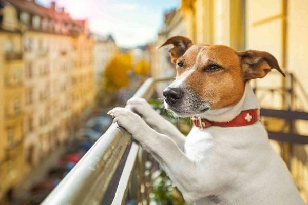 cane affacciato al balcone