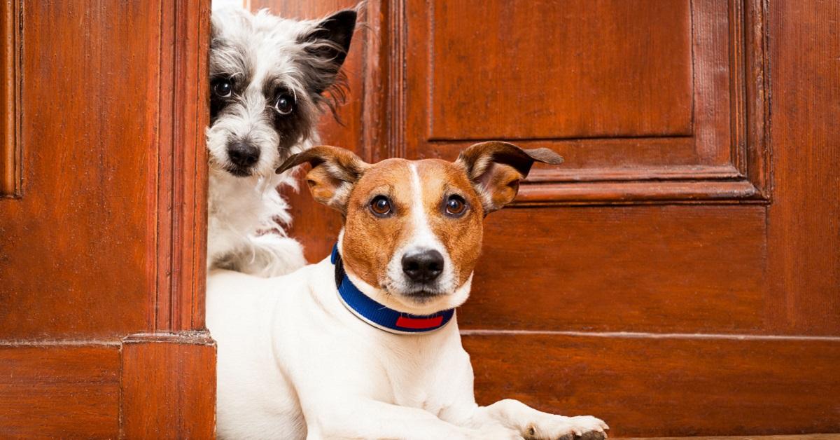 cani davanti alla porta