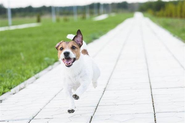 cane che scorrazza su vialetto