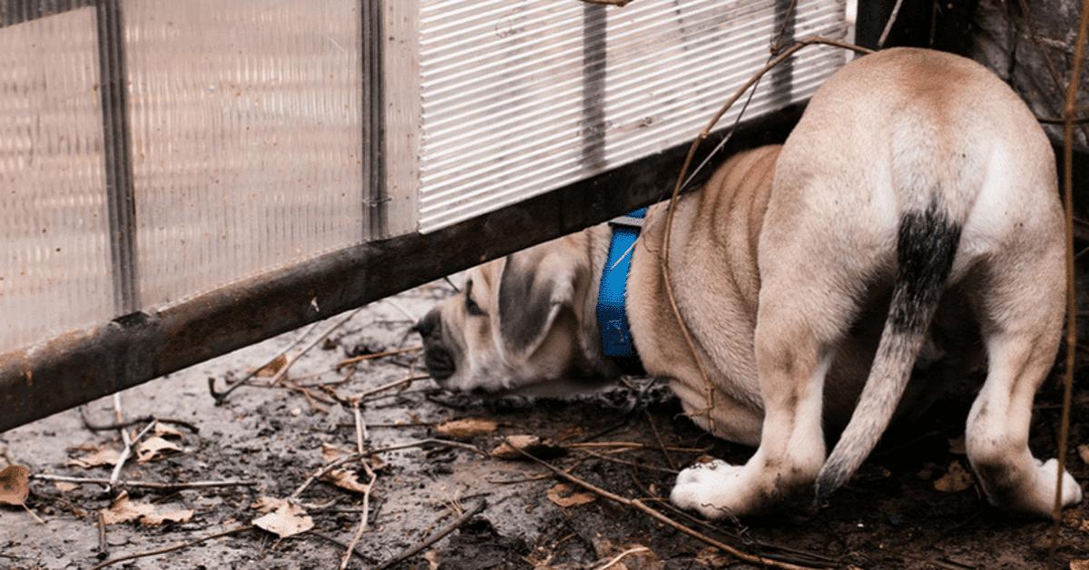 cane che cerca di passare sotto cancello