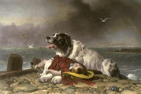 cane che ha salvato una donna