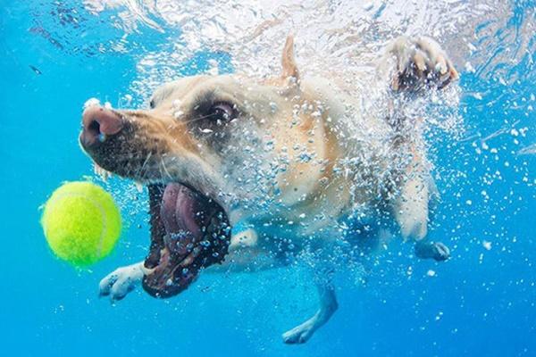 I cani possono trattenere il respiro? Ecco tutto quello che bisogna sapere