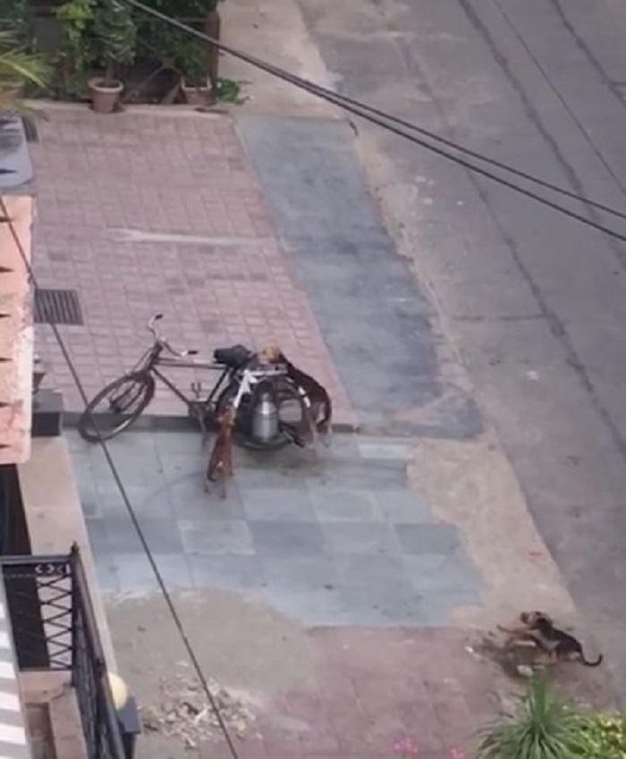 cani bicicletta latte