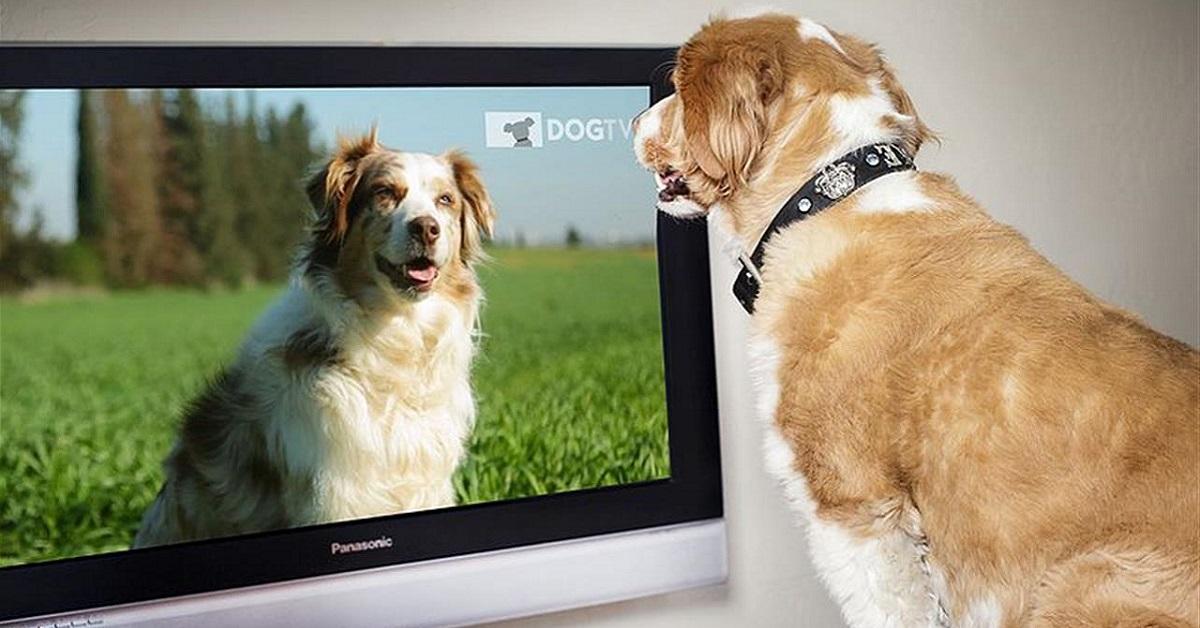 cane davanti al televisore