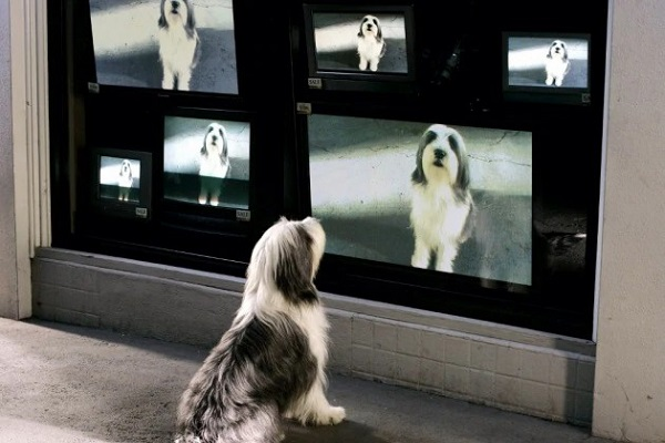 I cani reagiscono ai video di altri cani o non riescono a capirli?