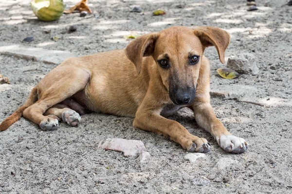cucciolo di cane che vive in strada