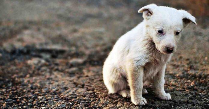 cucciolo di cane abbandonato in strada