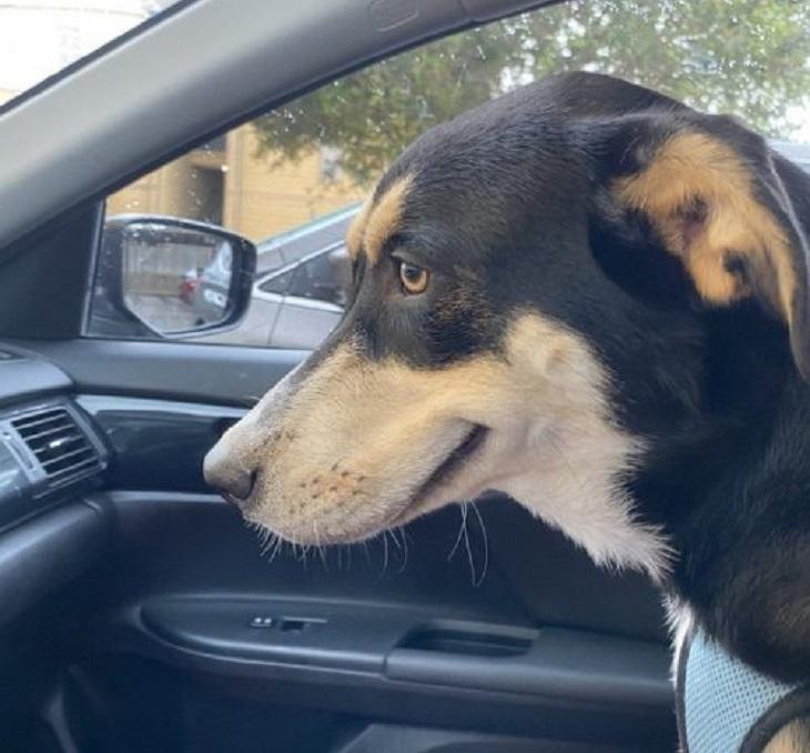 Charlie, il cane che fa l'occhiolino alla proprietaria (FOTO)