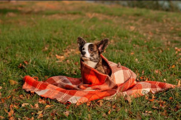 Cibi autunnali per i cani: lista di alimenti di stagione che Fido può mangiare