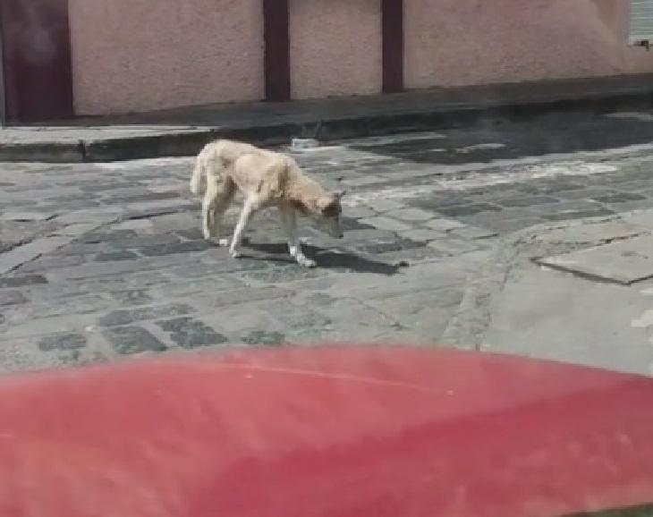 coby cane solo senza meta