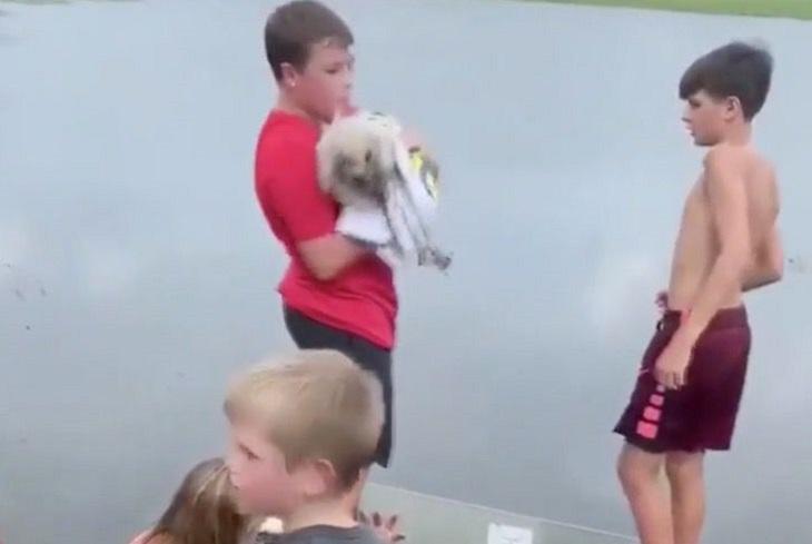 coco cane grate canale scolo