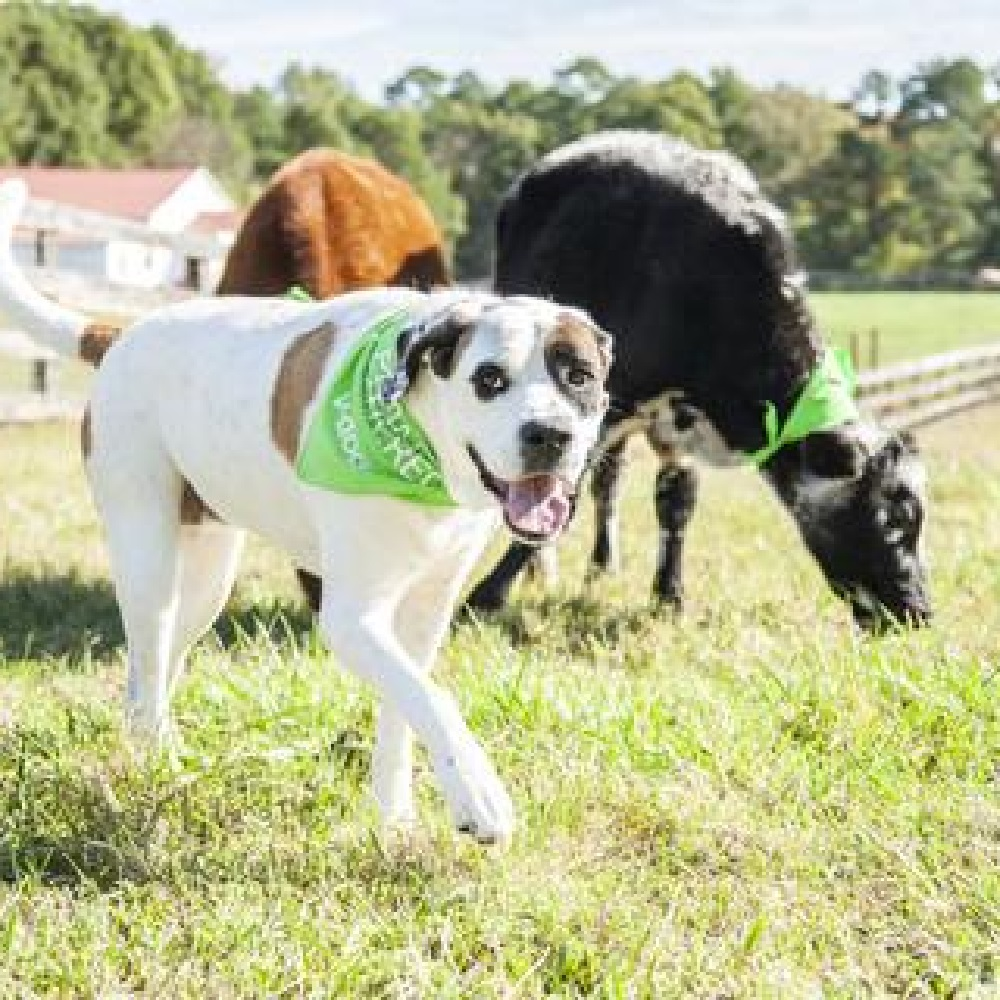 colton cucciolo 6 anni