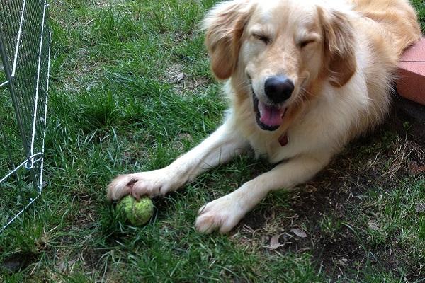 Come ride un cane? Ecco tutti i modi in cui dimostra di divertirsi