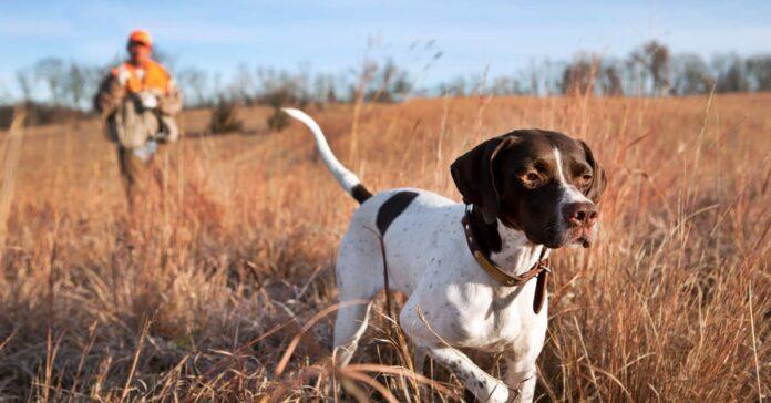cacciatore insieme al suo cane