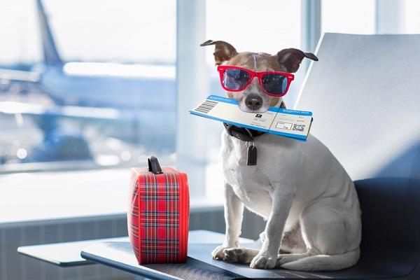 cane con carta d'imbarco