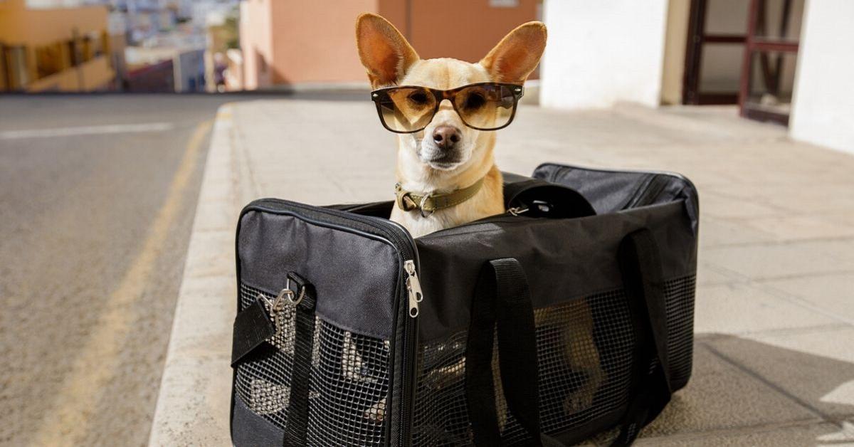 cane pronto per viaggiare in aereo