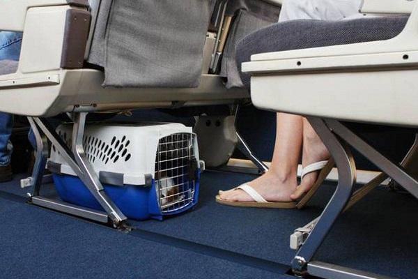cane sotto il sedile di un aereo