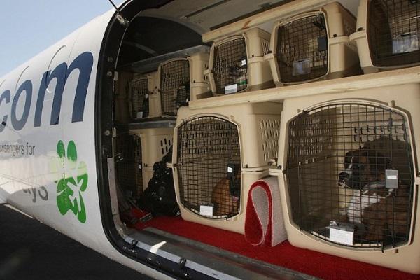 kennel con cani in stiva