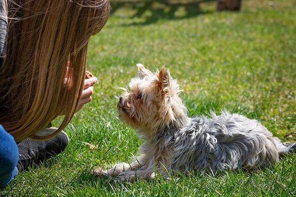 cagnolino e amica