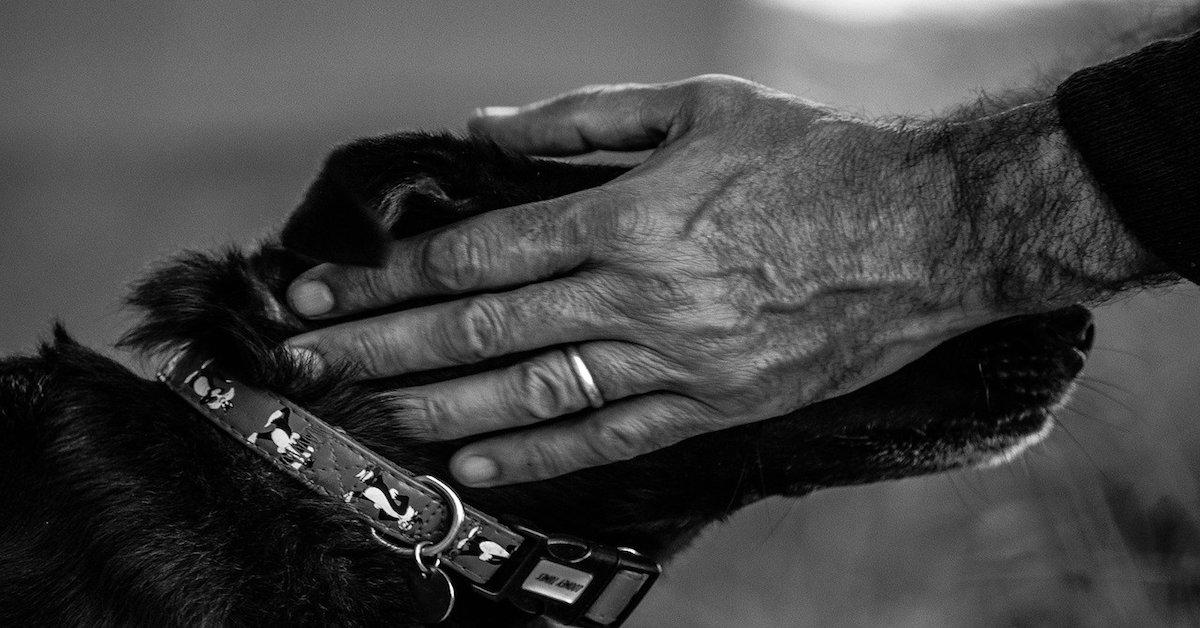 contatto fisico uomo e cucciolo di cane