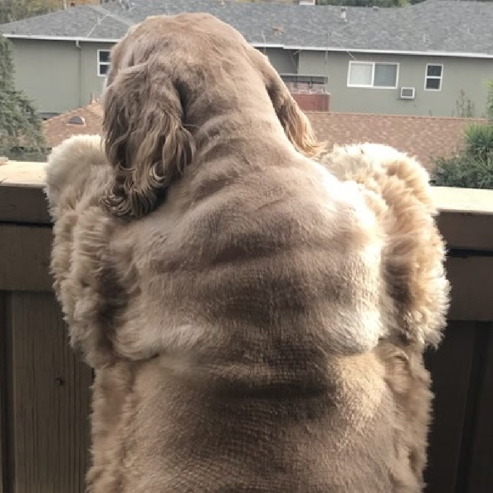 corina cane sovrappeso inizia percorso