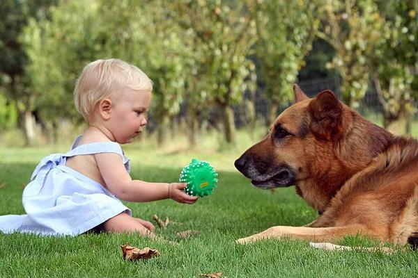 bimba piccola con palla e cane