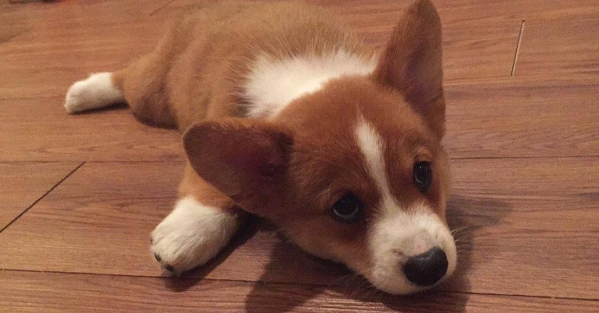 cuccioli di cane scivola sul pavimento