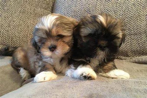 cuccioli sul divano