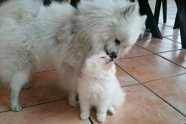 mamma che coccola il suo cucciolo