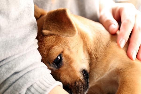 cucciolo infastidito da un abbraccio