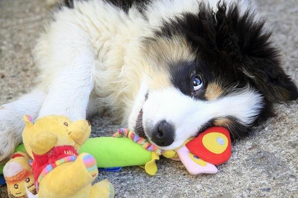 cucciolo tenero con i suoi giocattoli