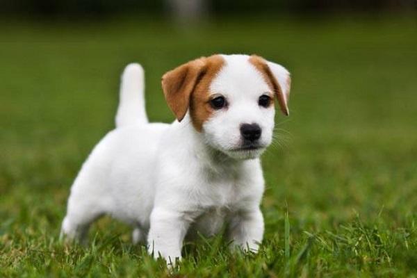 cagnolino bianco sull'erba