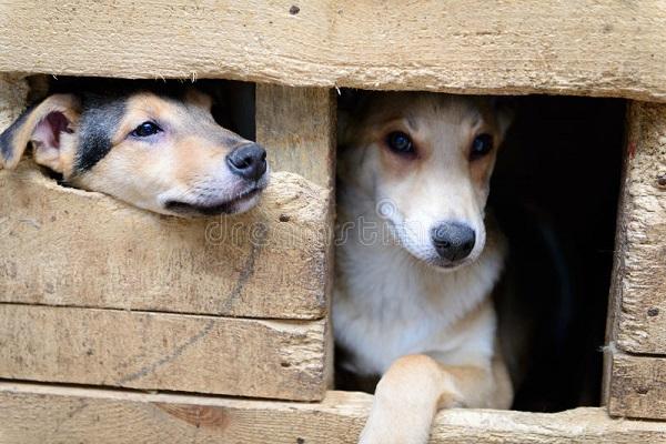 Cucciolo di cane non dorme nella cuccia: perché e che cosa si può fare