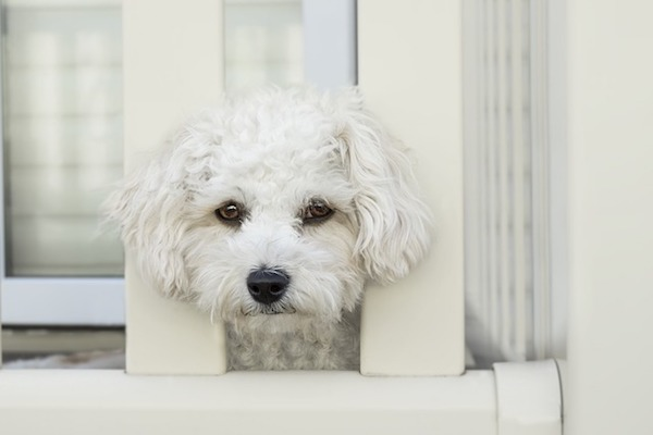 cane è triste solo in casa