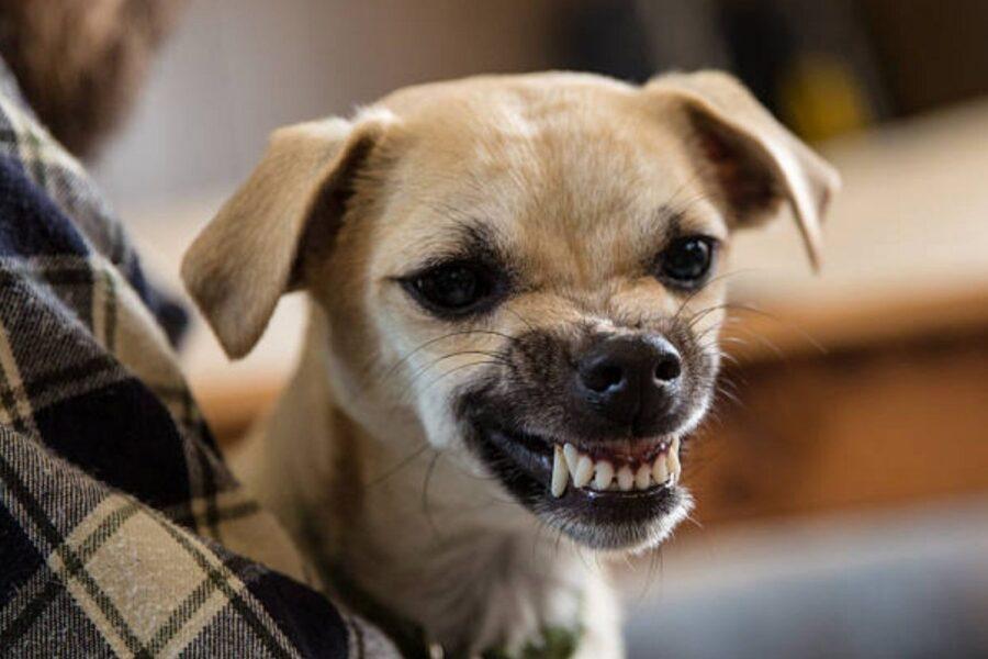 cane che ringhia alle persone