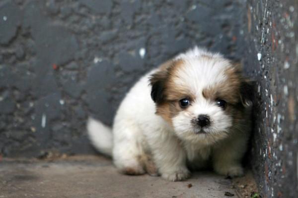 cucciolo di cane di pochissimi mesi