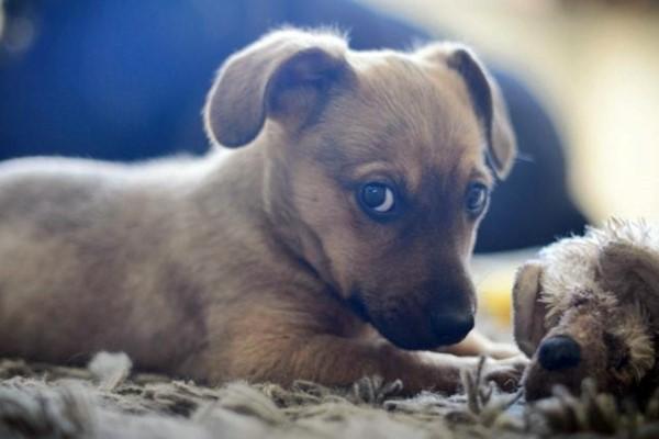 cane con il suo pupazzo preferito