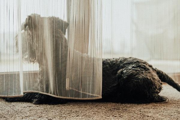 cane davanti a una finestra