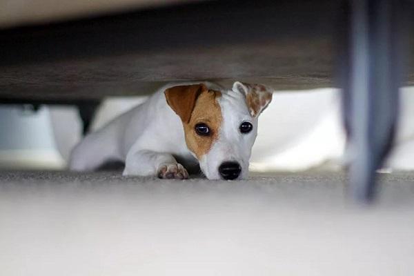 cucciolo sotto il letto