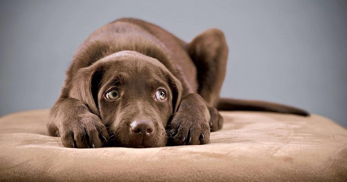 cucciolo di cane su un cuscino