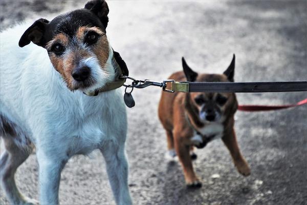 cucciolo di cane terrore pioggia