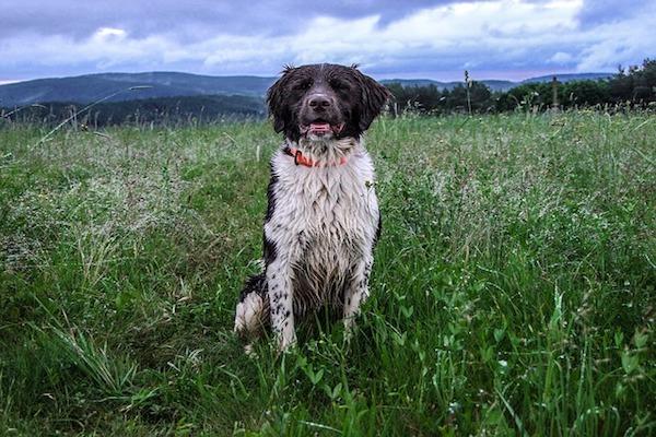 cane contento sotto la pioggia