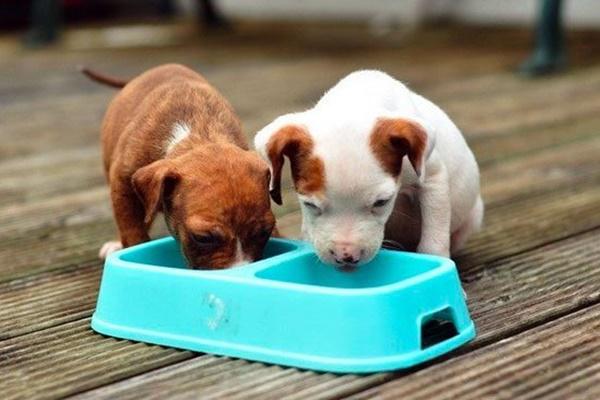 cuccioli che mangiano vicini