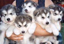 signora che tiene in braccio dei cuccioli