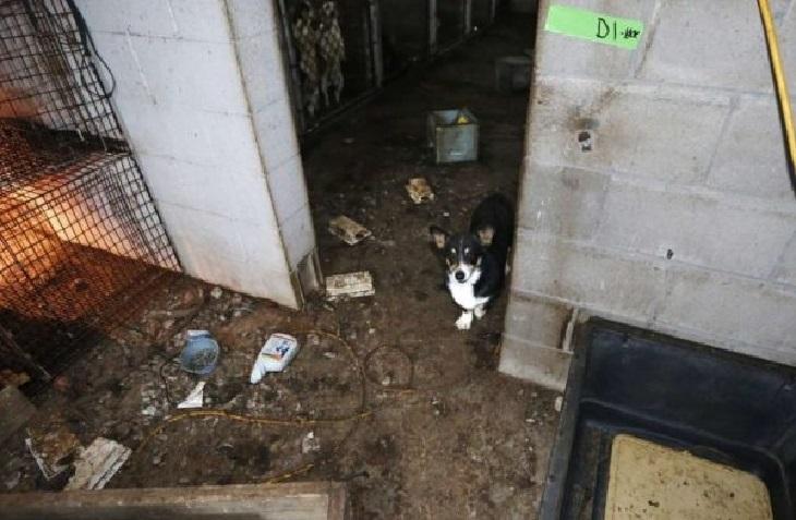 Daniel, il cucciolo pastore tedesco salvato da un luogo infernale (VIDEO)