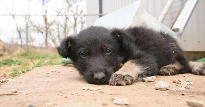 daniel cucciolo pastor tedesco salvato da luogo infernale