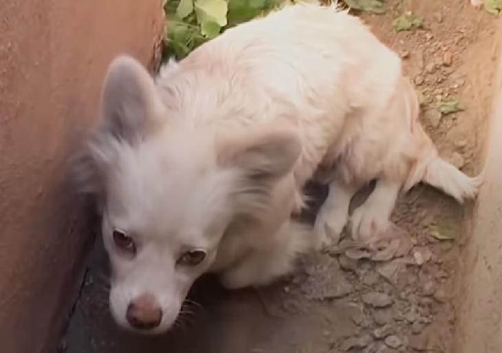 debby cagnolina intervento soccorritori