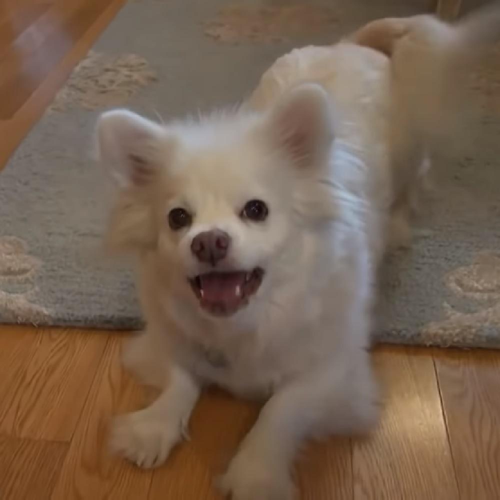debby cane felicità famiglia